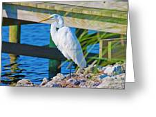 Topsail Egret Greeting Card