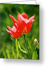 Toronto Tulip Greeting Card
