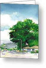 Torrey Pine Greeting Card