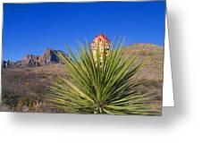Torrey Yucca Greeting Card
