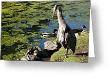 Tortoise And The Heron Greeting Card