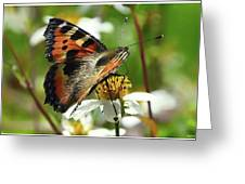 Tortoise Butterfly Greeting Card