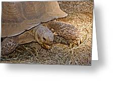 Tortoise Eating Lunch In Living Desert Zoo And Gardens In Palm Desert-california  Greeting Card