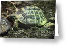 Tortoise Photobomb Greeting Card