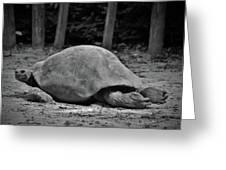 Tortoise Relaxing Greeting Card
