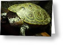 Turtle With A Tale To Tell Greeting Card