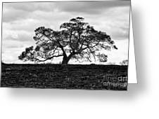 Tortue Oak Greeting Card
