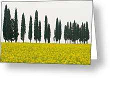 Toscana Cypresses Greeting Card