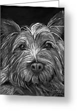 Tosha The Highland Terrier Greeting Card