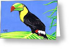 Toucan Bird Greeting Card