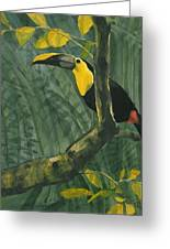 Toucan In Jungle Greeting Card