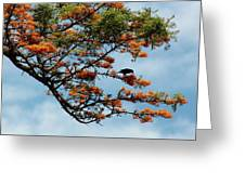 Touch Of Orange Greeting Card