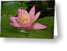 Touch Of Pink Greeting Card by Karen Wiles