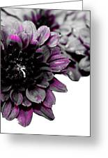 Touch Of Pink Mums Greeting Card
