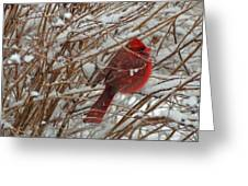 Touch Of Red For An Icy Morning Greeting Card