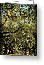 Towering Canopy Greeting Card
