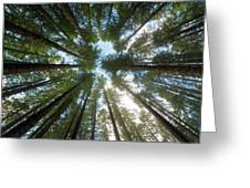 Towering Fir Trees In Oregon Forest State Park Greeting Card