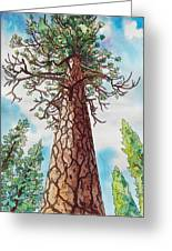 Towering Ponderosa Pine Greeting Card