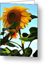 Towering Sunflower Greeting Card