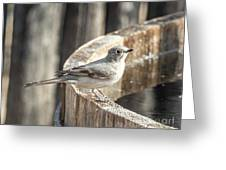 Townsends Solitaire Greeting Card