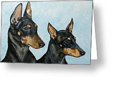Toy Manchester Terriers Greeting Card