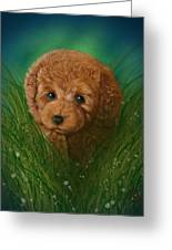 Toy Poodle Puppy Greeting Card