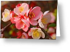 Toyo-nishiki Quince Blooms Greeting Card