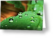 Traces Of Rain Greeting Card