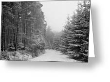 Track, Winter, Slaley Woods Greeting Card