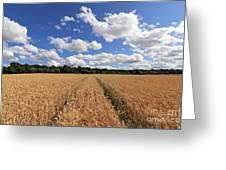 Tracks Through Wheat Field Greeting Card