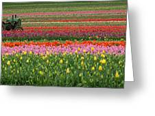 Tractor Among The Tulips Greeting Card