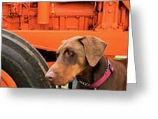 Tractor Dog Greeting Card