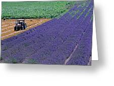 Tractor In A Lavender Field Greeting Card