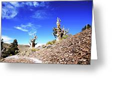 Trail Among The Ancients Greeting Card