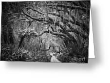 Trail At Cumberland Island Greeting Card