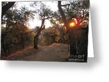 Trail At Sunrise Greeting Card