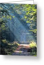 Trail In Morning Light Greeting Card