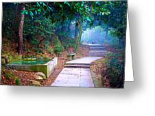 Trail In Woods Greeting Card