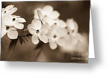 Trail Of Flowers Greeting Card