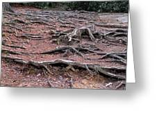 Trail Of Roots Greeting Card