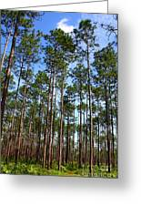 Trail Through The Pine Forest Greeting Card