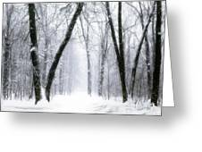Trail Through The Winter Forest Greeting Card