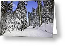 Trail Through Trees Greeting Card by Garry Gay