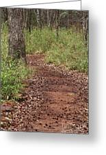 Trail To Beauty Greeting Card