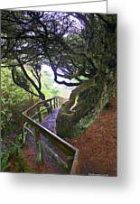 Trail To Copalis Beach Greeting Card