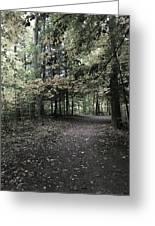 Trail Walking  Greeting Card