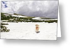 Traildog At Kingston Peak Snow Field Greeting Card