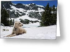 Traildog In Snow At Missouri Lakes Greeting Card