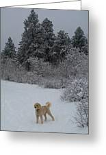 Traildog Loving The Winter Scene In The Flatirons Greeting Card