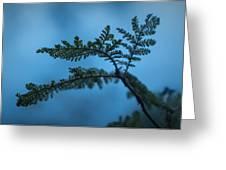 Trailside Foliage Greeting Card